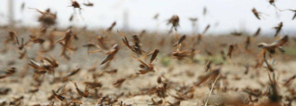 $1.5m Allocated to Fight Desert Locusts