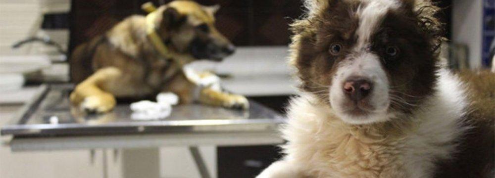 Documentary on Stray Animals