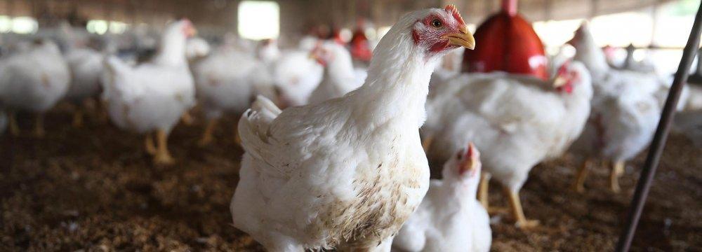Bird Flu in  14 Provinces