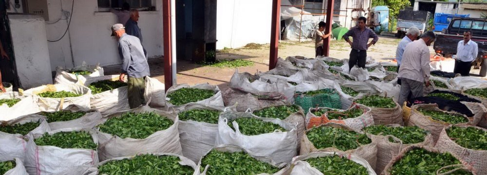 Agriculture sector generates 32.5% of the total value added in the country and roughly 10% of the gross domestic product.