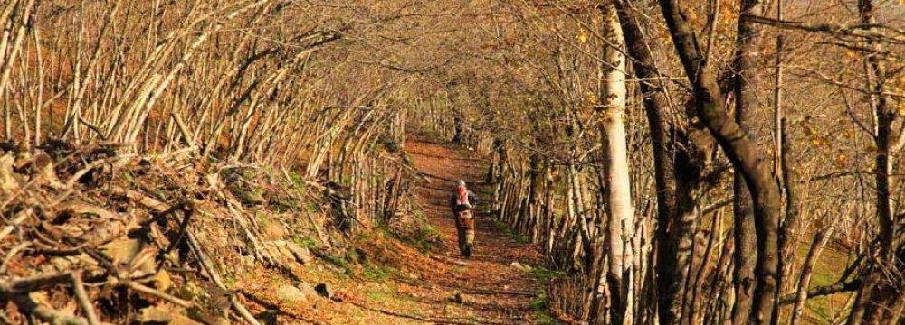Forest Trekking
