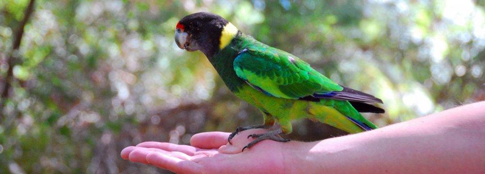 Climate Change Lengthens Australian Bird Wings