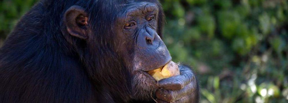 Primates Struggling to Survive