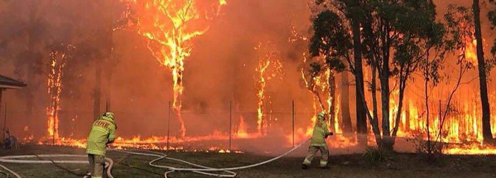 Bushfire Scorches Sydney Suburbs