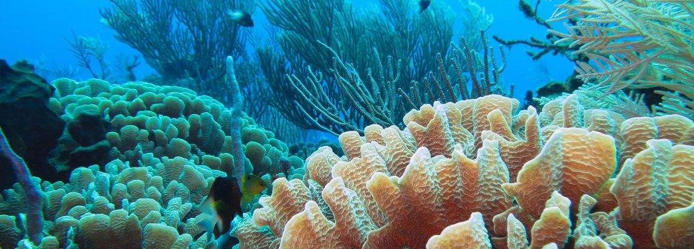 Bushehr Marine Ecosystem Studied for Heat Impact