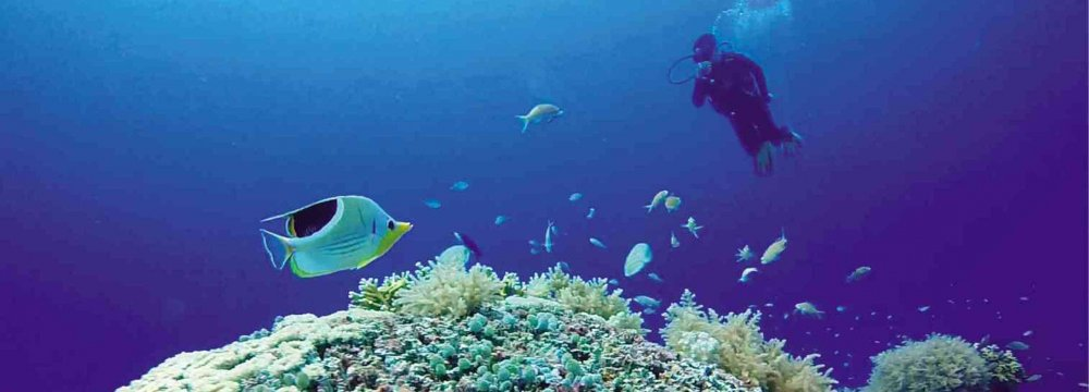 Corals are sensitive to temperature changes, particularly to a rise in temperature.