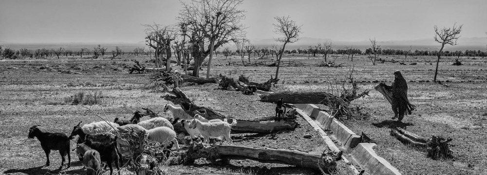 15-Fold Increase in Anti-Desertification Funding