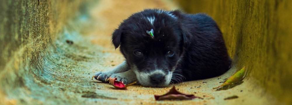 Activists demand better protection for stray dogs, especially in the wake of reports that they are put down inhumanely.