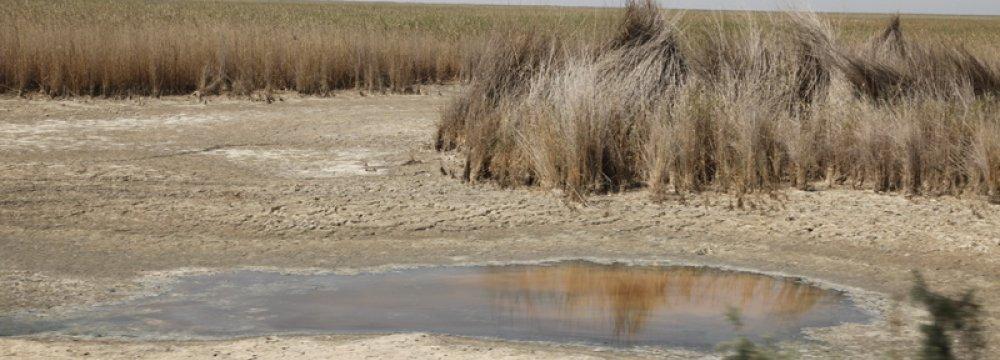 Wetland Fish Death Under Review