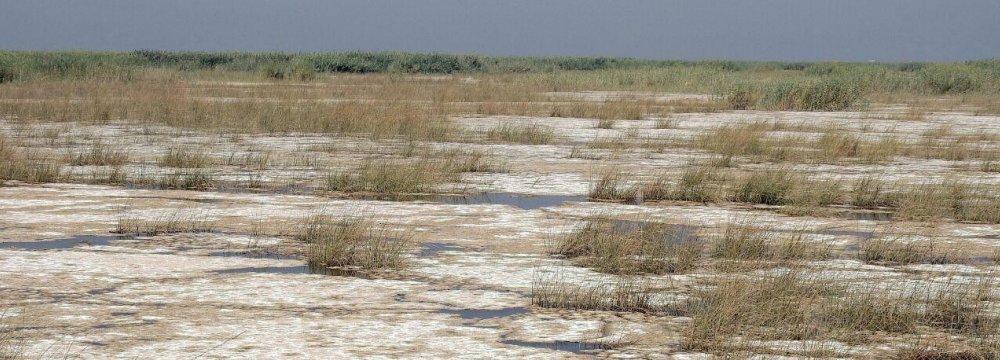 Hour Al-Azim Wetland Water Plan Suspended