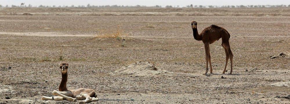 Fresh Relief for  Jazmourian Wetland