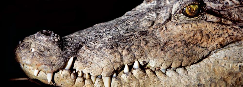 Chabahar Launches Mugger Crocodile Sanctuary
