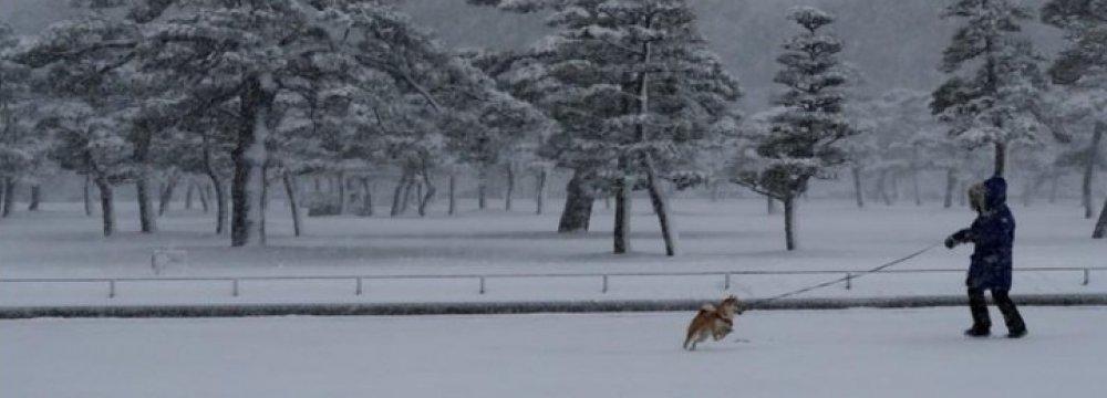 Rare Snowstorm Disrupts Tokyo Transportation