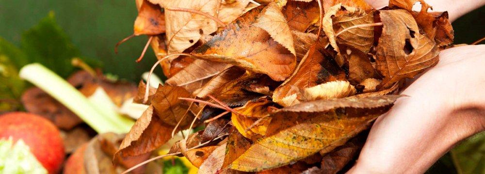 DOE Criticizes Agriculture Waste Mismanagement
