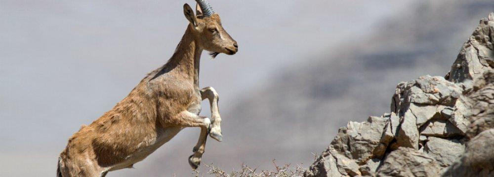 Urbanization Encroaching on Wildlife Habitats