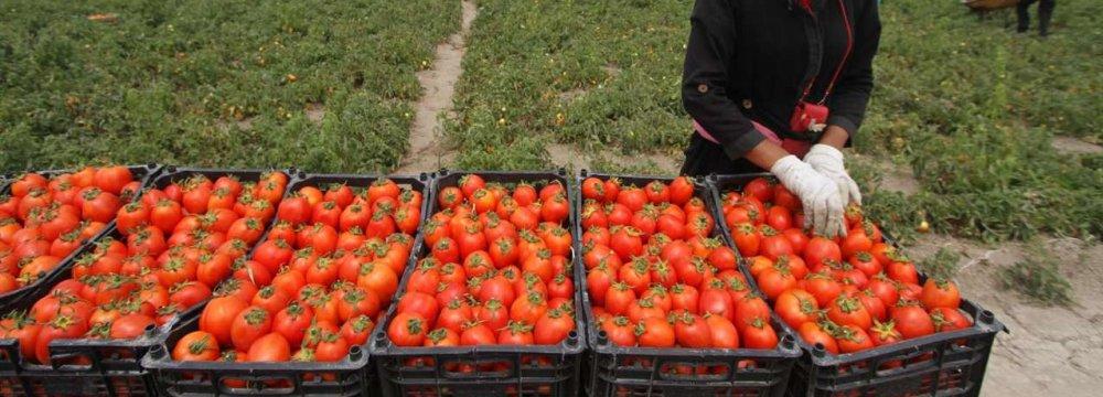 Mazandaran Agro Exports Exceed $310m