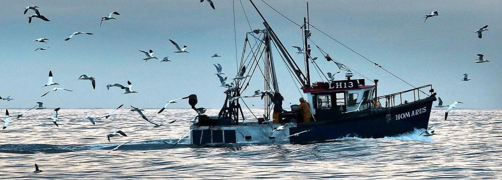German fishermen depend on access to UK herring.