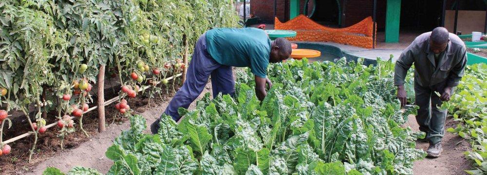 Decline in Zambia Growth