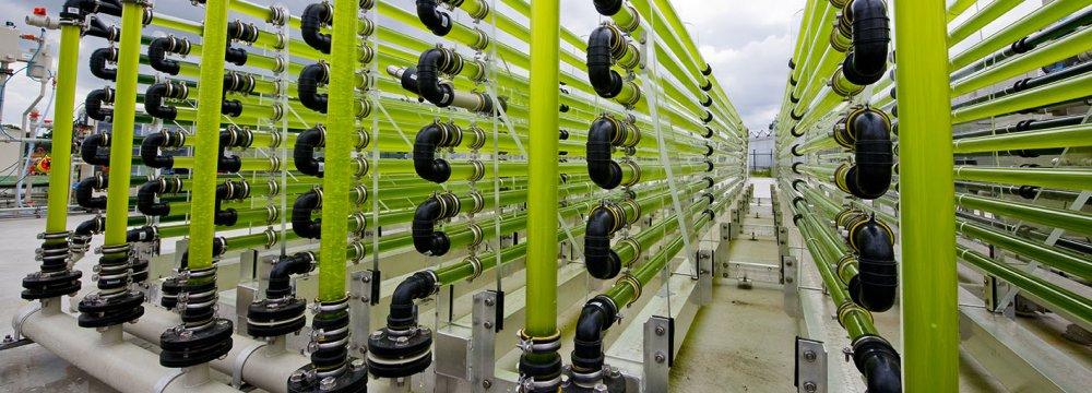 Algae bioreactor at AlgaeParc in Wageningen, Netherlands.