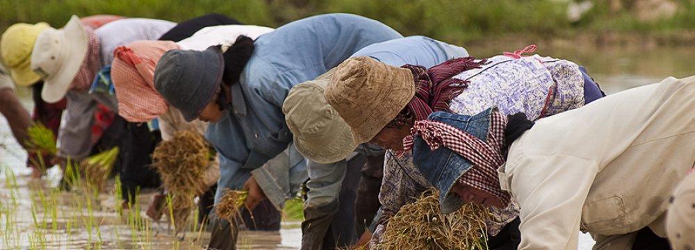 World Bank: Fixing Mindanao Economy Key to Philippines Progress
