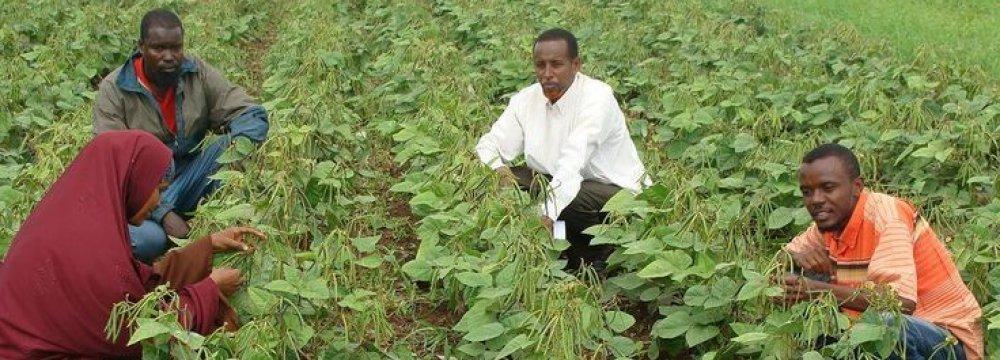 Somalia to Grow 2.5%