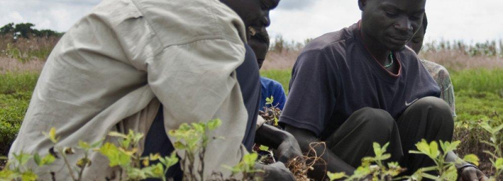 WB Resumes Malawi Aid