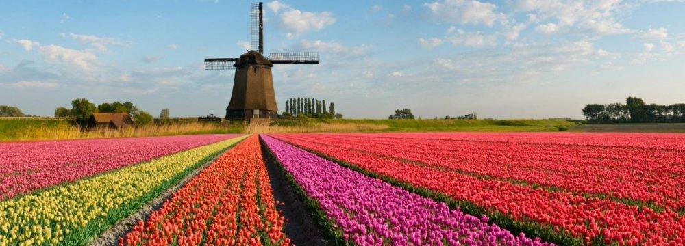 Despite Positive Signs,  Dutch Growth Faces Hurdles