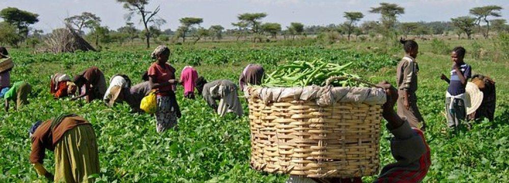 Ethiopia to Maintain Lead