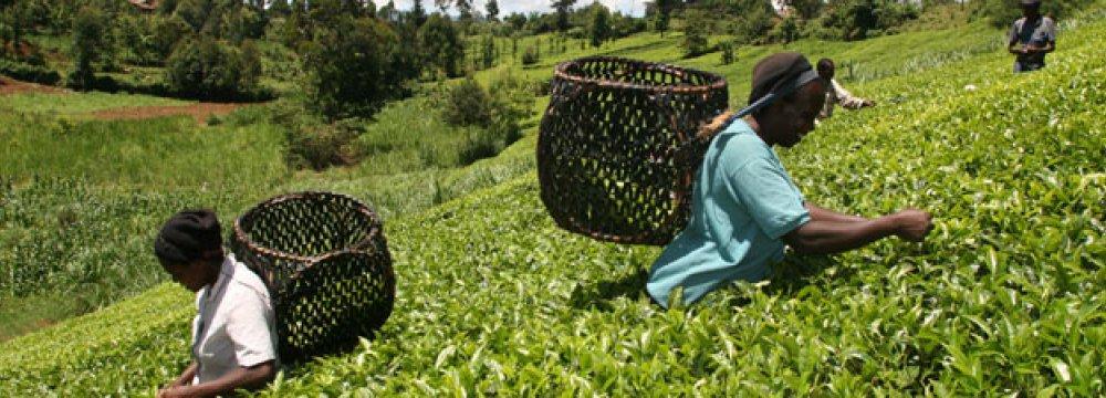 Kenya and Tanzania Can Weather Economic Shocks