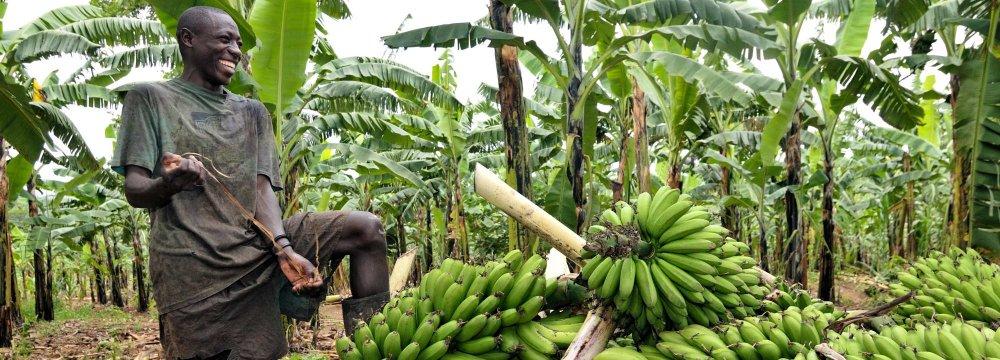 Uganda Growth Estimated at 6.5%