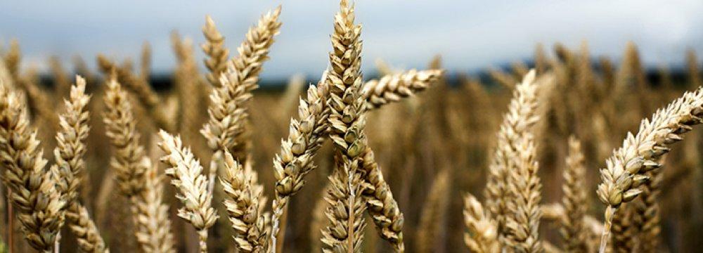 Argentina Will Tax Grain Exports, Slash Ministries