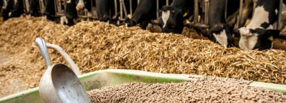 No Concern Over Livestock Feed Supply
