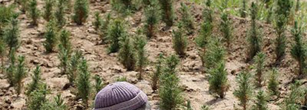 Planting Trees to Weather Dust Storms