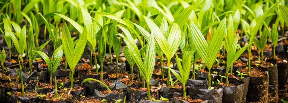 140K Hectares Dedicated to Organic Farming