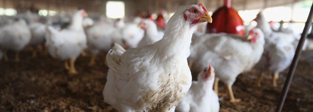 Japan Bird Flu Outbreak Fuels Asia Fears