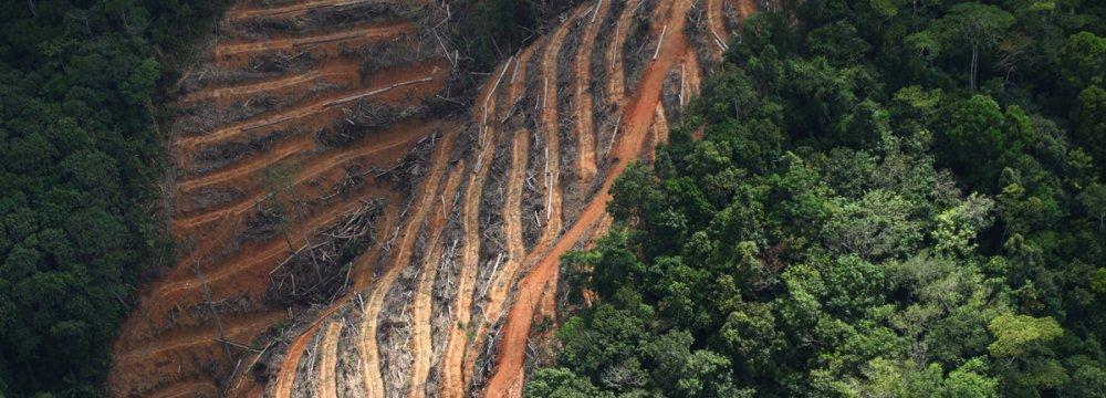 Firms Underestimating Risks of Deforestation