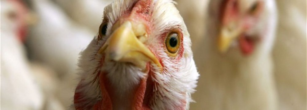 2nd Human Bird Flu Case in HK
