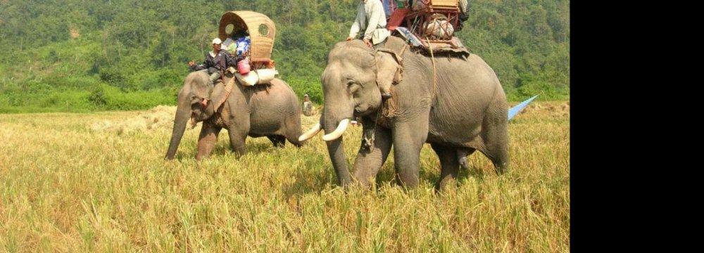 TripAdvisor Suspends Sales for Animal Tourism