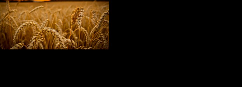 $278m Bonds to Finance Wheat Purchases