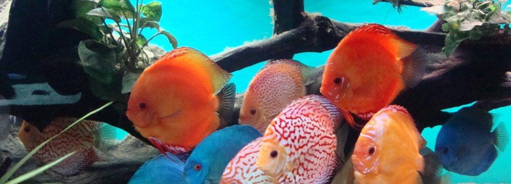 Ornamental Fish Exports