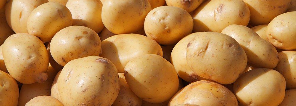 Potato Exports Rise