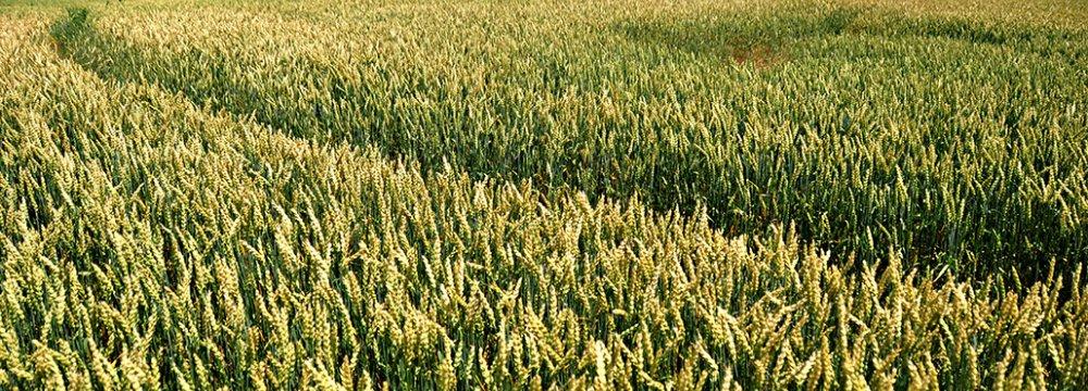 Iranians Turn Agro Waste  Into Fuel