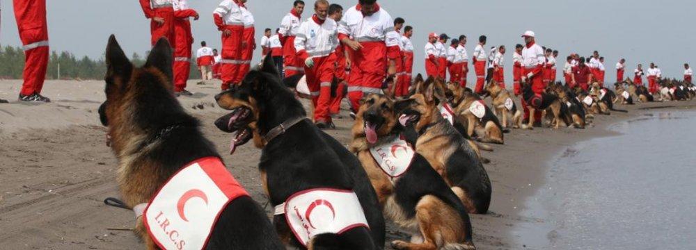 Tributes to Smart Rescue Dog 'Doman'