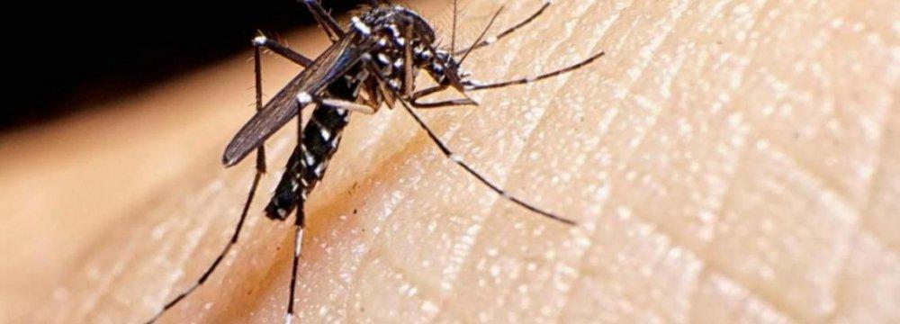 Zika Infections in Vietnam