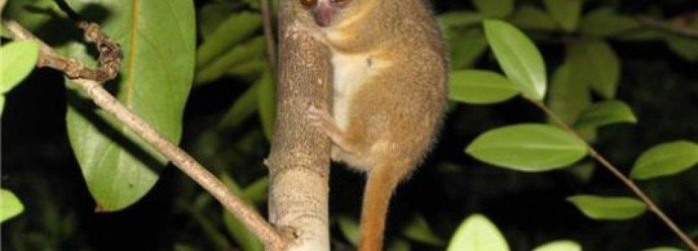 3 New Primate Species Found