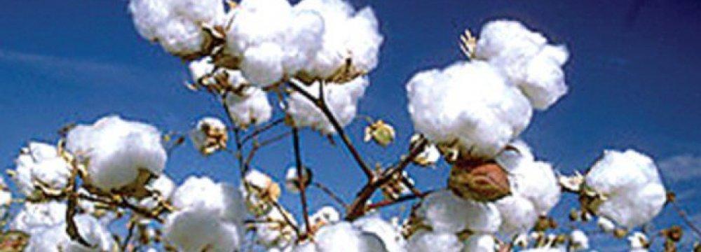Pak Cotton Production Falls