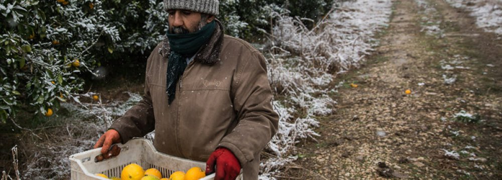 Cold Damages Northern Orchards