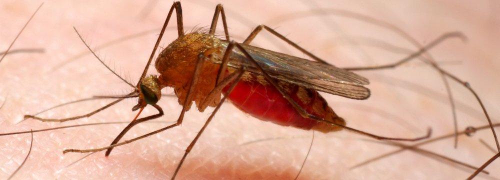 Kyrgyzstan Malaria-Free