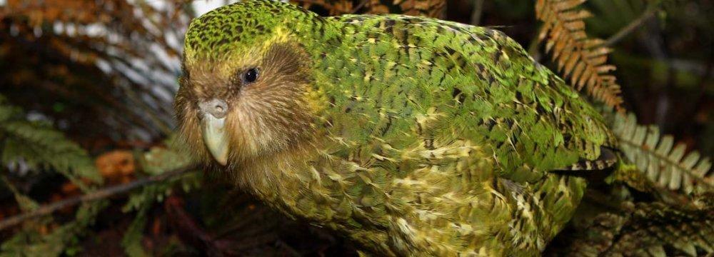 More Birds at Risk of Extinction