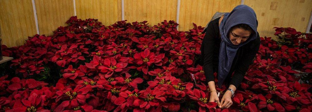 Flower Exhibition  in Qazvin
